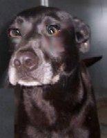 524littleelmblackdog
