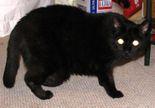 531oldblackcat