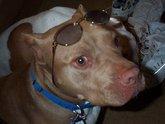 21617browndogglasses08