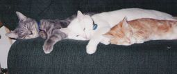 22324teamcatsleeping08_2