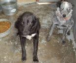 428reservist_dogs08