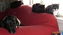 221couchdogscats
