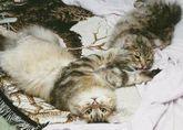 526twocats