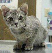 Codycat
