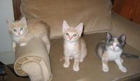 Kittensampler