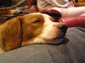 Sleeperspaniel